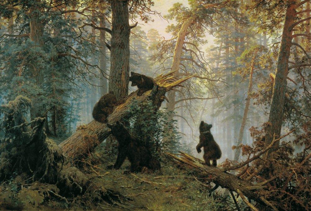 Хищник и утро в сосновом лесу
