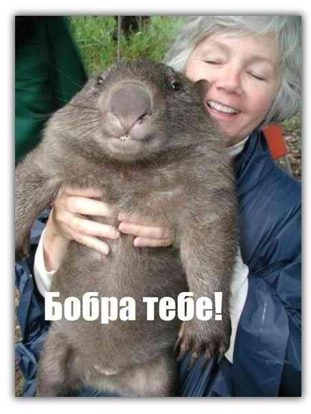 http://s.pikabu.ru/images/big_size_comm/2012-09_3/13474245231193.jpg