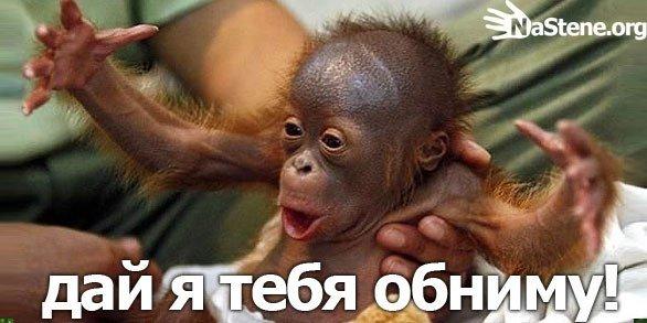 http://s.pikabu.ru/images/big_size_comm/2012-09_4/13478994248390.jpg