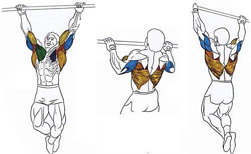 Подтягивания... это базовое и самое эффективное упражнение для расширения верхней области широчайших мышц спины.