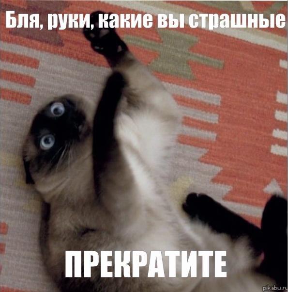 фото кот насрал