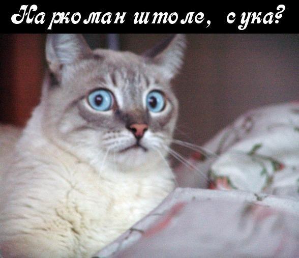Террористы пытаются создать на Харьковщине своеобразный плацдарм для дальнейших терактов по всей Украине, - Лубкивский - Цензор.НЕТ 8519