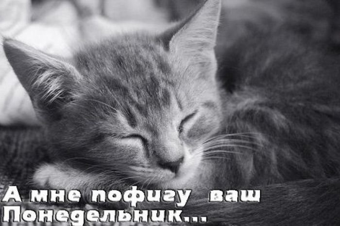 http://s.pikabu.ru/images/big_size_comm/2012-12_4/13557370822579.jpg