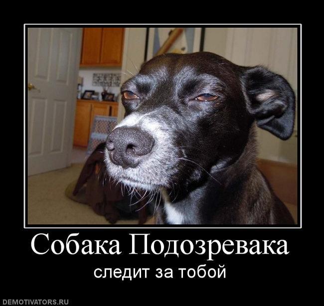 Потому что я победитель по жизни)