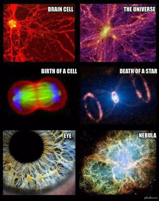 Смерть Мозга фото