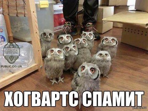 http://s.pikabu.ru/post_img/2013-01_3/1358048828_110290993.jpg