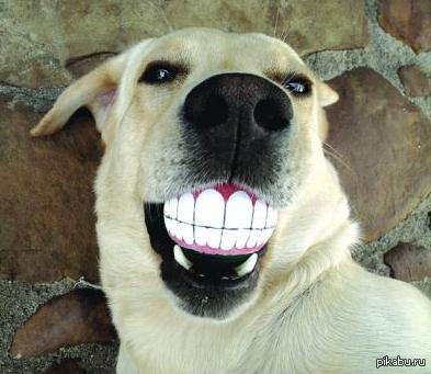 животные с большими зубами фото