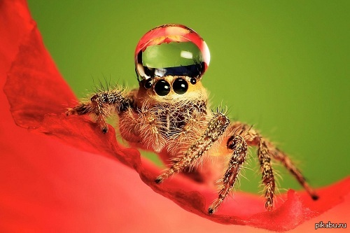 Cicada  Wikipedia
