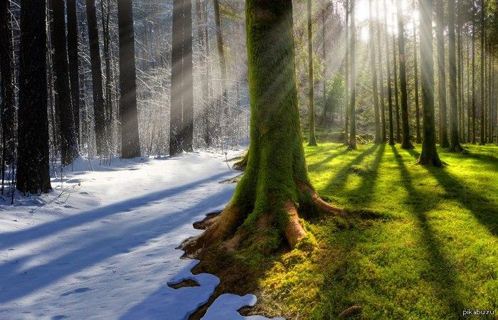 Зима лето 11