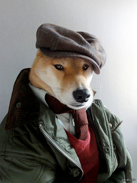 фото собак в кепках