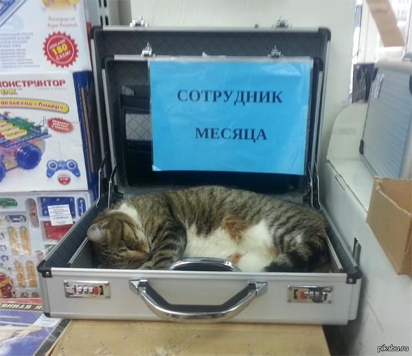 Русские прикольные ипорно в 19 фотография