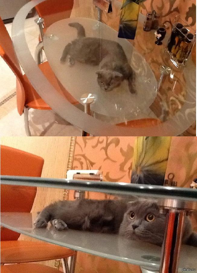Фото кот за столом