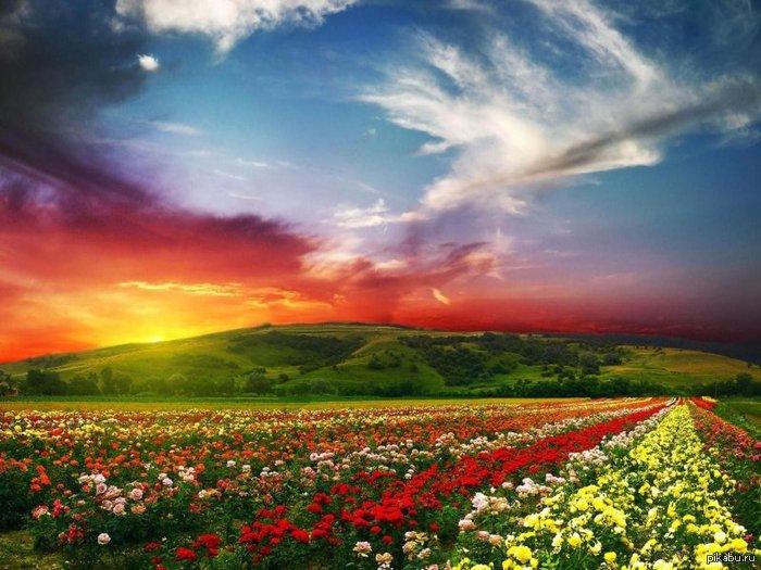 Невероятно как много цветов) Картинки ...: pikabu.ru/story/neveroyatno_kak_mnogo_tsvetov_1033276