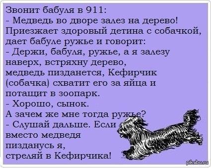 Анекдот про собачку кефирчика