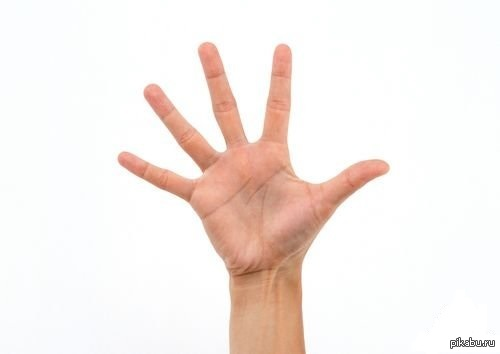 картинка пальцев на руках