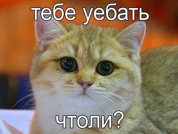 http://s.pikabu.ru/post_img/2013/03/01/9/1362148163_209807160.jpg