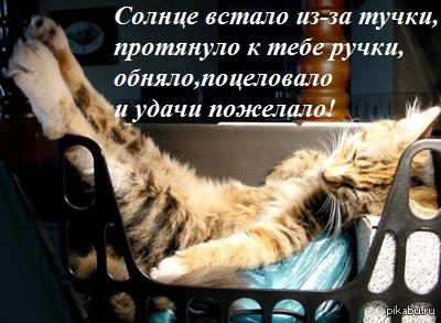 фото с котятами доброе утро