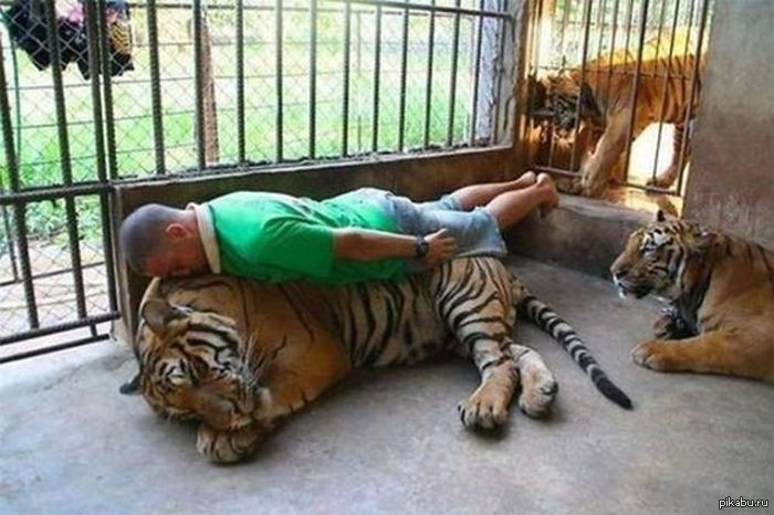 картинки дебильные животные
