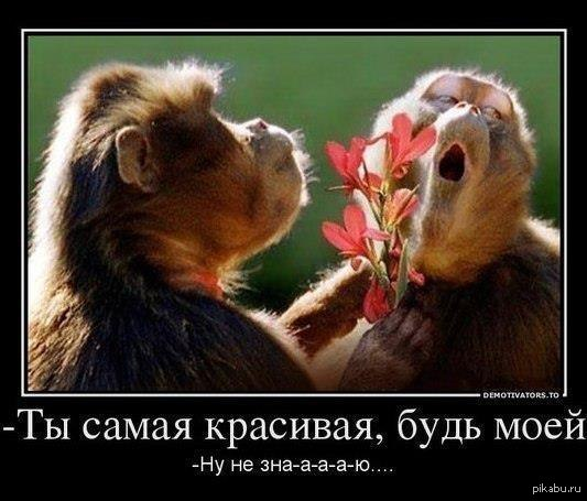 картинка ты красивая: