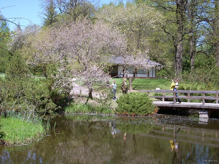 москва японский сад схема