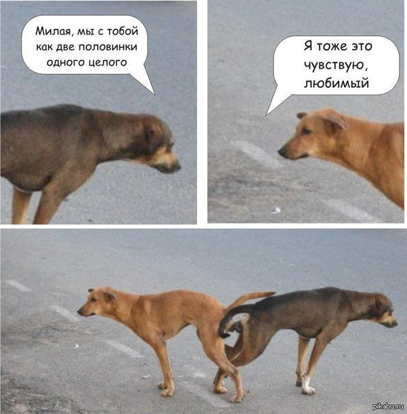 собака секс: