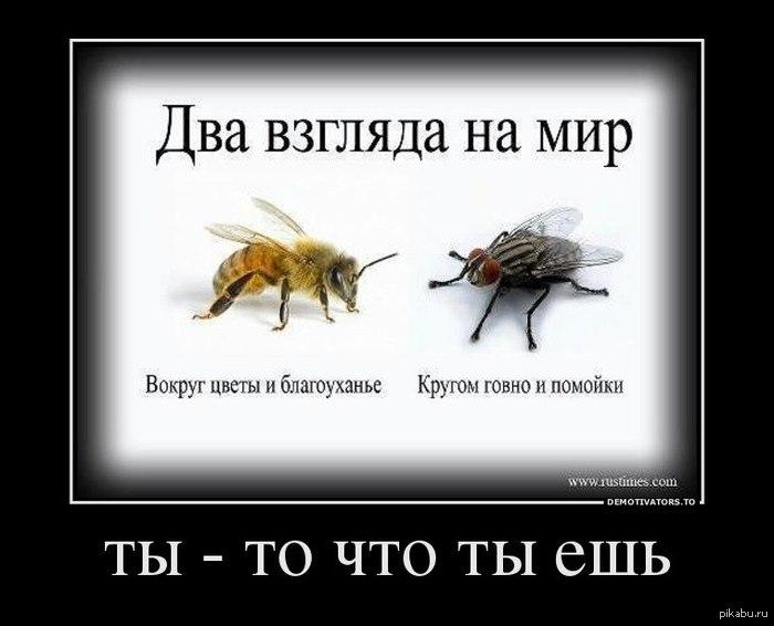 http://s.pikabu.ru/post_img/2013/04/04/6/1365061592_292670616.jpg