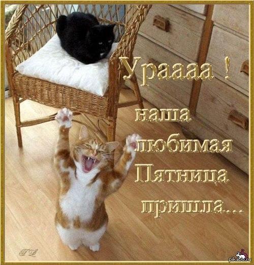 Ура пятница товарищи пятница кот