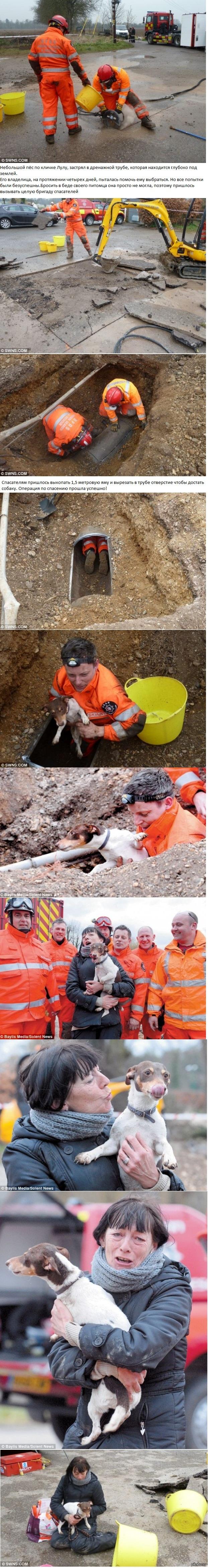 Спасение собаки, застрявшей в трубе