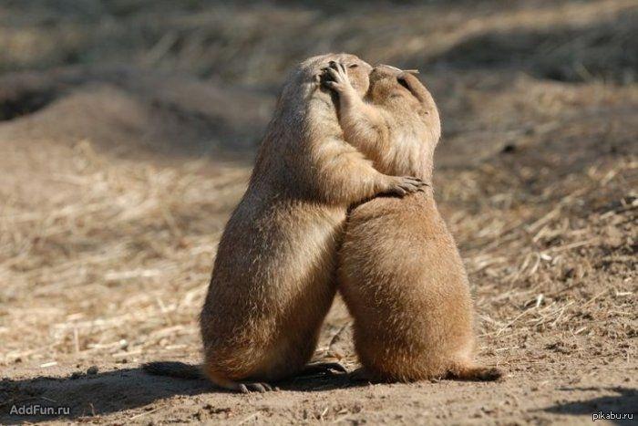 Минута нежности всем целующихся