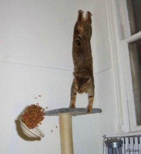Кот и гравитация