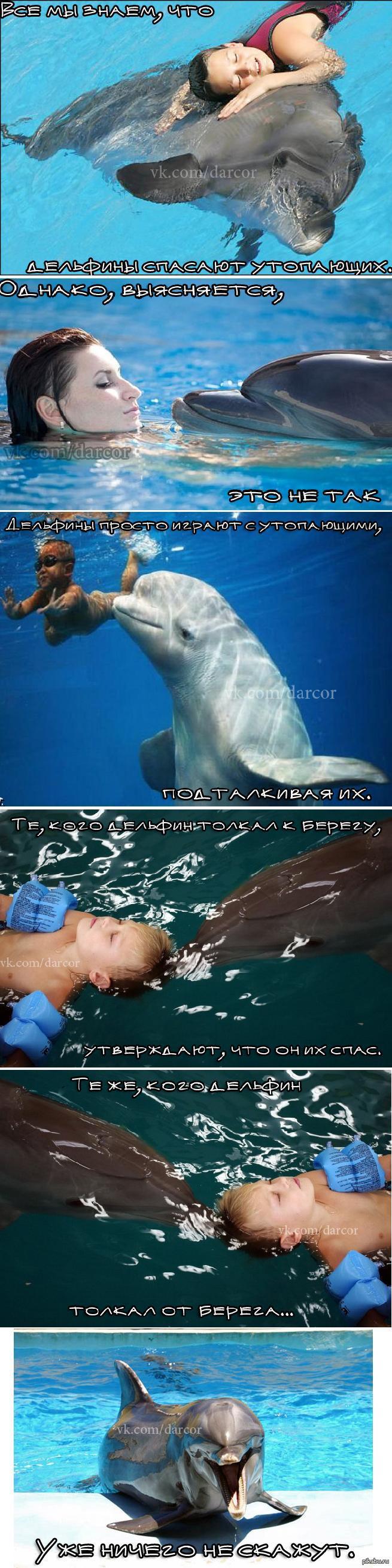 Дельфины (Длиннопост)   Дельфины, Тайна