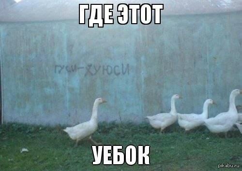 http://s.pikabu.ru/post_img/2013/05/04/7/1367661387_350925225.jpg