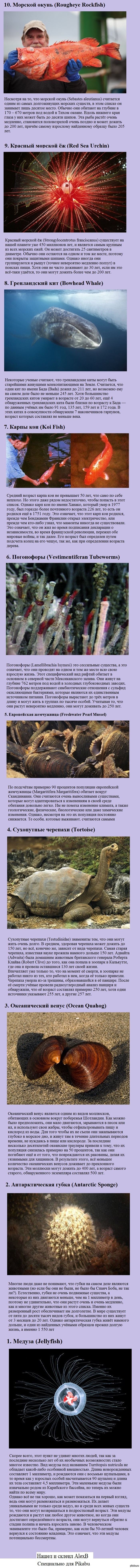 http://s.pikabu.ru/post_img/2013/05/05/6/1367739458_612286397.jpg