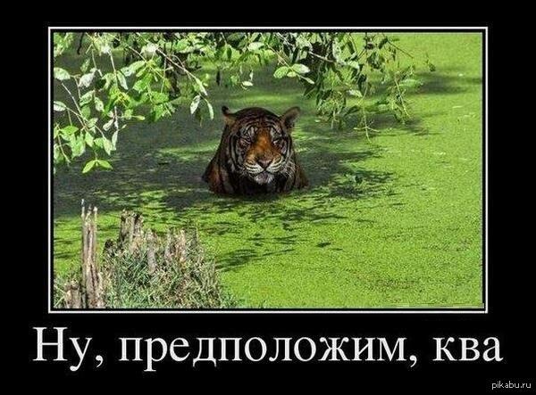 http://s.pikabu.ru/post_img/2013/05/08/10/1368028088_2034545627.jpg