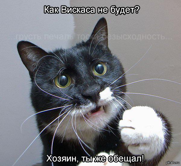 грустный кот игра