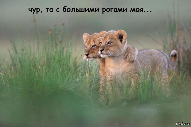 фото животные природа #10
