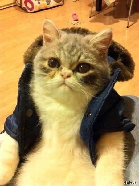 фото кошек крутые