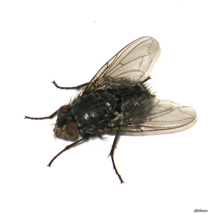 аватарка муха: