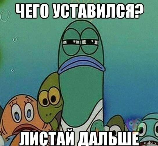 спанч боб приколы: