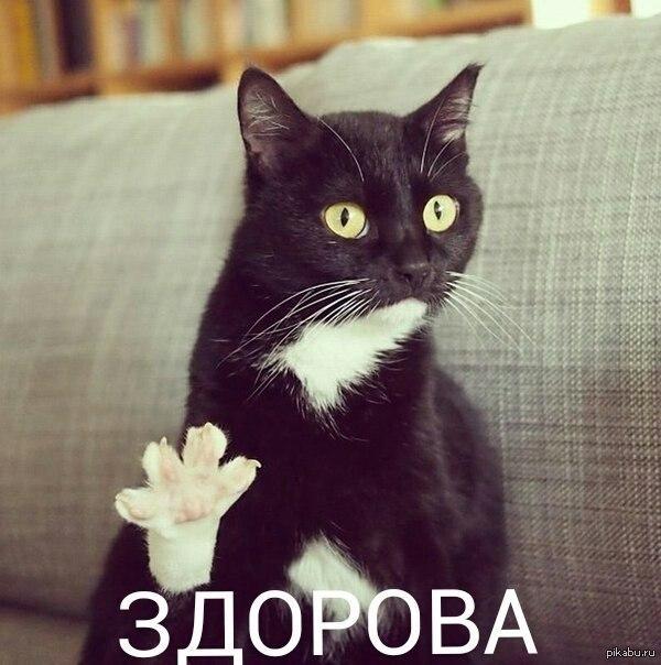 http://s.pikabu.ru/post_img/2013/07/03/12/1372881213_1109517611.jpg