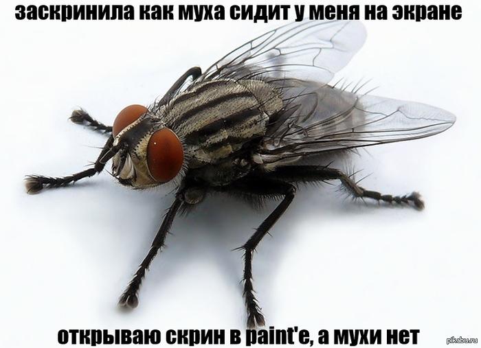 муха рисунок: