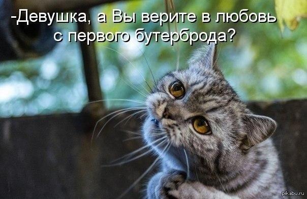 http://s.pikabu.ru/post_img/2013/07/15/6/1373878617_517889531.jpg