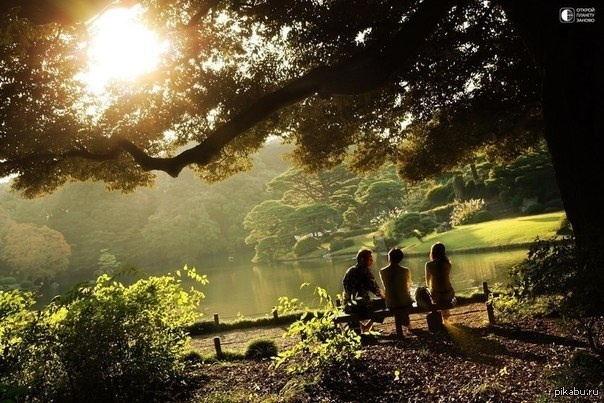 фото доброе утро красивое природа