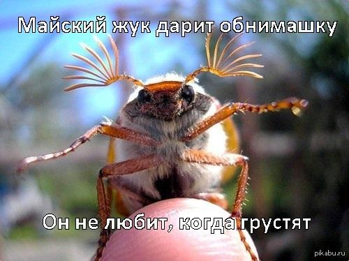Фото К чему снится майский жук в волосах