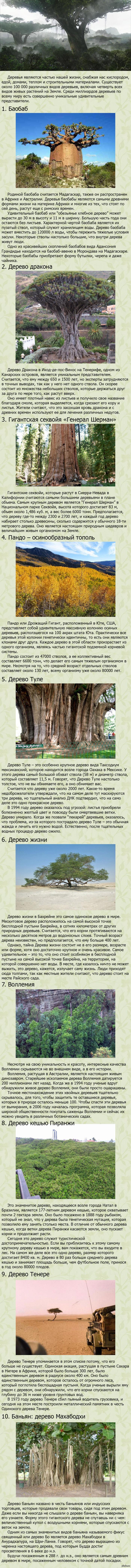 Фантастические деревья мира   длиннопост, дерево, деревья
