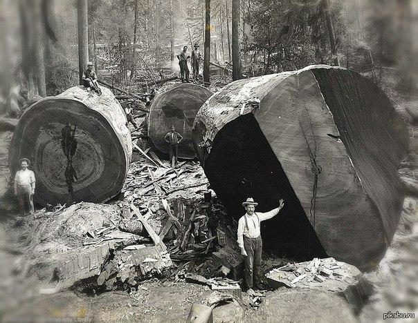 ... лесорубов конца 19 века 19 век, работа: pikabu.ru/story/19_vek_1463173