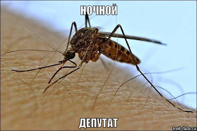 комары картинка