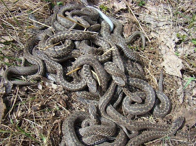 сонник много змей ловить их
