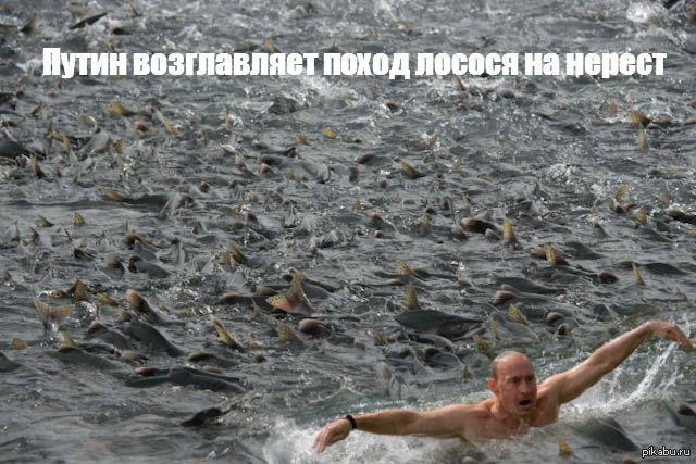 """Украинские байкеры объявили охоту на """"ссученных волков"""" Путина - Цензор.НЕТ 9269"""