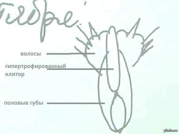 нарисовал: